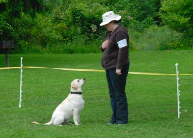 seattle positive reinforcement dog training classes, beacon hill puppy class, beacon hill puppy classes, dog trainer, seattle best training, best training in seattle, award winning dog trainer, certified behavior consultant, in home dog training, private dog trainer
