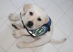 Diabetic Service Dogs Illinois