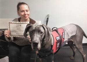 Diabetic Alert Dog Trainers Uk