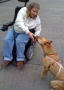 A wheelchair bound student of our Seattle dog training school working to try to task train her pet dog for service work.