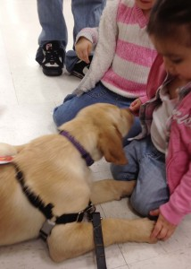 dog training classes in seattle help behave manner puppy play make better best dog trainer white center free advice techniques positive reinforcement