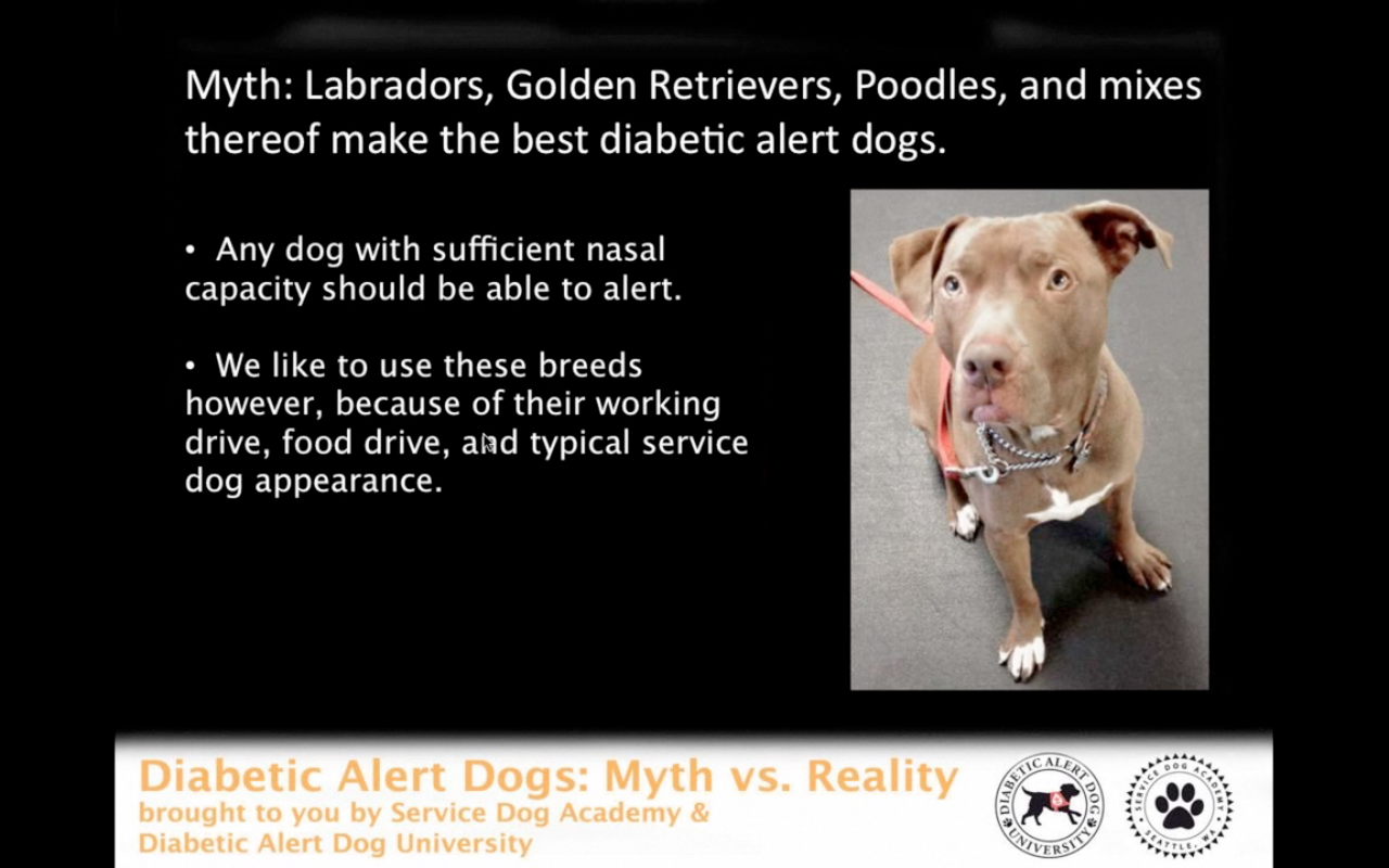 the effectiveness of diabetic alert dogs Diabetes alert dogs (dads) are growing in popularity as an alternative  as  highly effective at detecting both hypoglycemia and hyperglycemia.