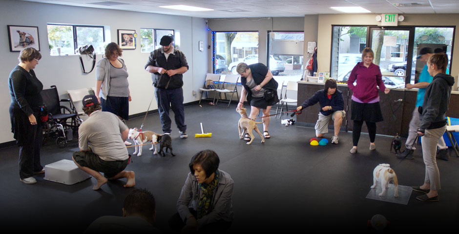 Certified Dogs Training Schools Illinois