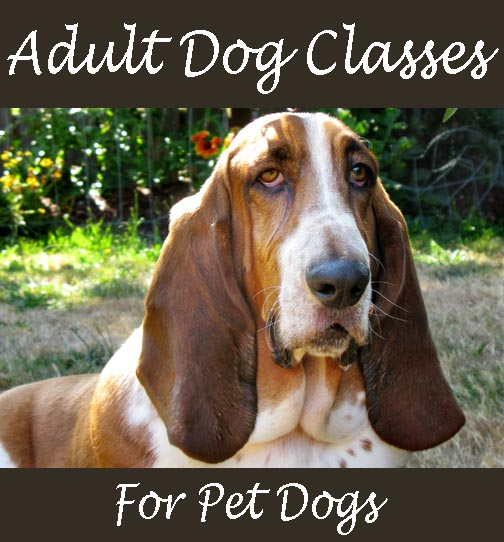 adult dog training classes in seattle beacon hill sodo ahimsa downtown caesar milan pack leader clicker train alpha roll bad behaved dominance