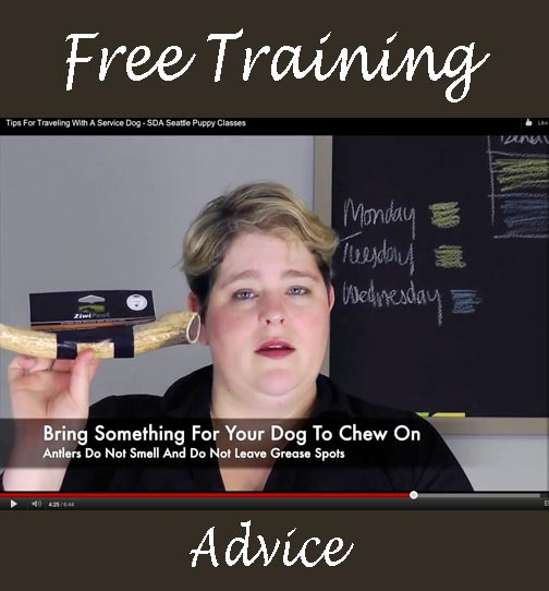 seattle free training advice for dogs puppy classes trainer sodo ahimsa dogworks affordable dog training class in beacon hill help behave manner jumper biter barker bad dog puppies play kindergarten kindergarden graduate best dog trainer white center free advice techniques positive reinforcement