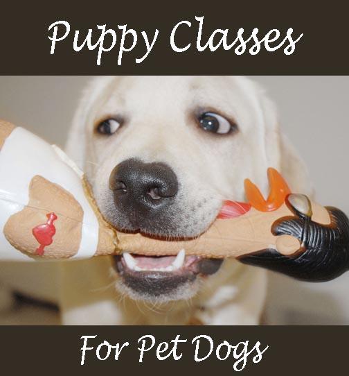 Best Dog Training Classes Seattle